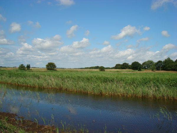 Hickling Broad is a great one when considering nature reserves near Great Yarmouth