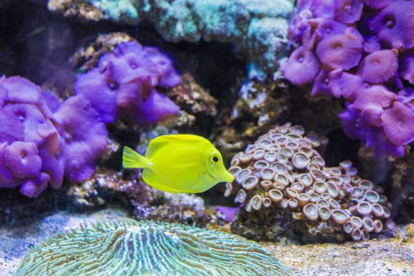 When planning family days out in Great Yarmouth, why not consider the Sea Life Centre?