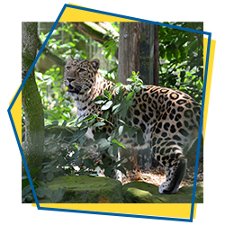 Top Animal Attractions and Zoos in Norfolk