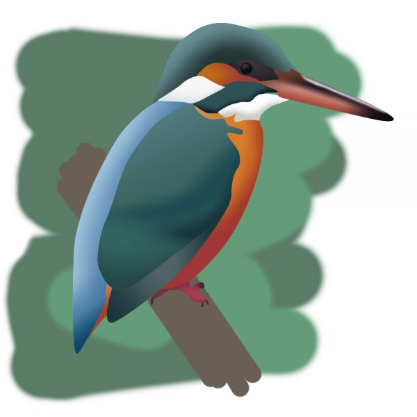 Kingfishers are just one of many varieties of birds you may spot when birdwatching with children Norfolk!