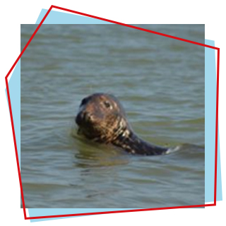How-to: Spot the Seals in Norfolk